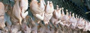 Ozone Disinfection And Deodorising In Chicken Abattoir